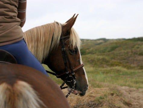 Excursión guiada a caballo en Pineda de Mar Barcelona